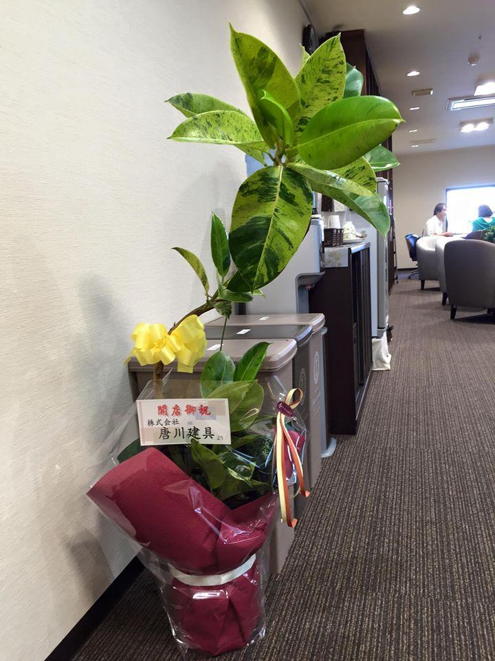 唐川建具観葉植物